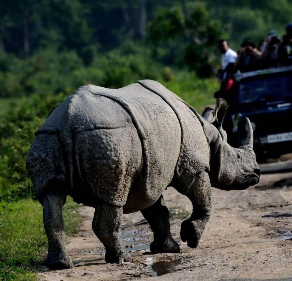Ine Horn Rhino