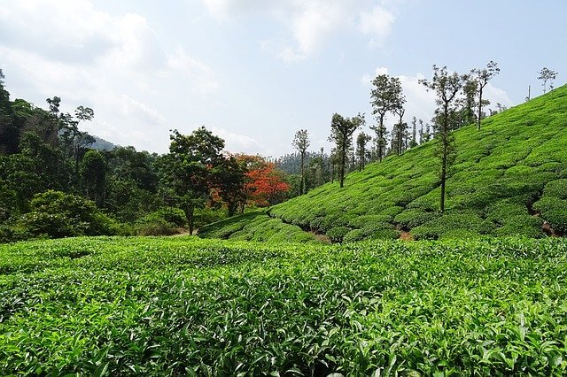 The heart of the Deccan Chikamagalur, Home to the first coffee plantations in India